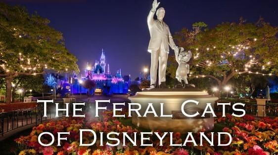 The Feral Cats of the Magic Kingdom