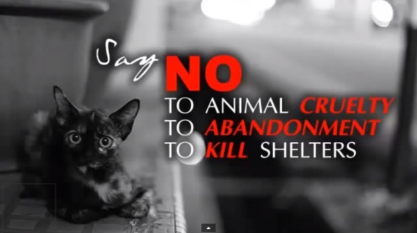 Stop Animal Cruelty Archives |