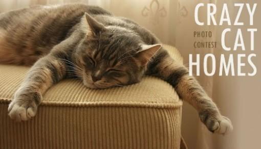 Crazy Cat Homes Photo Contest