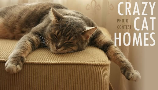 "Photo Contest – ""Crazy Cat Homes"""