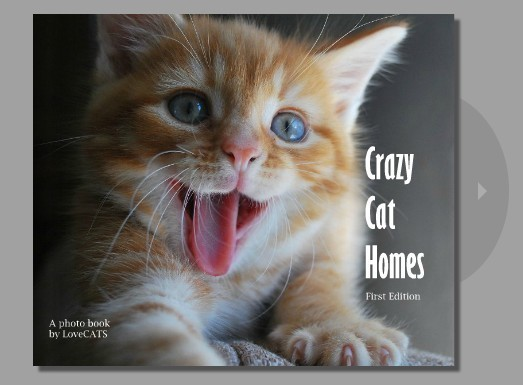 CRAZY CAT HOMES Now available online!