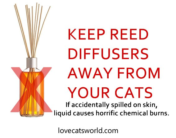 Reed diffusers extremely dangerous to cats