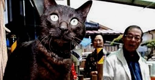 Suika, presumed killed during Japan's 2011 tsunami, returns home after 3 years!