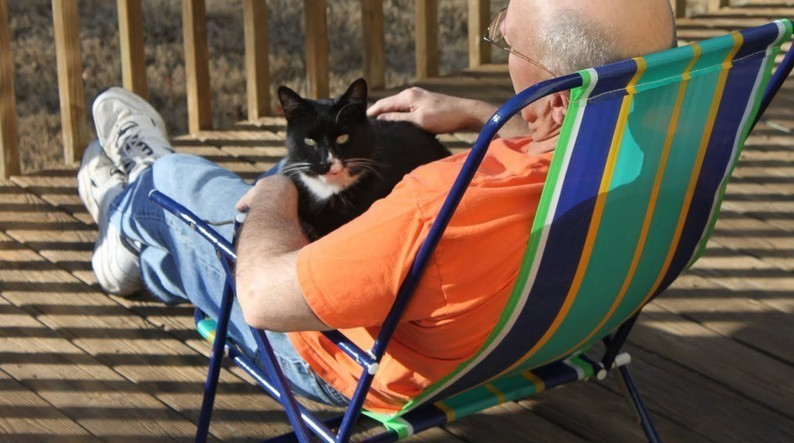 Cat ownership brings joy and wellbeing