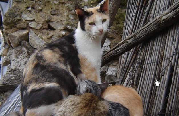 What can I do to help feral cats?