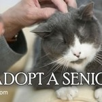 Why adopt an older cat?