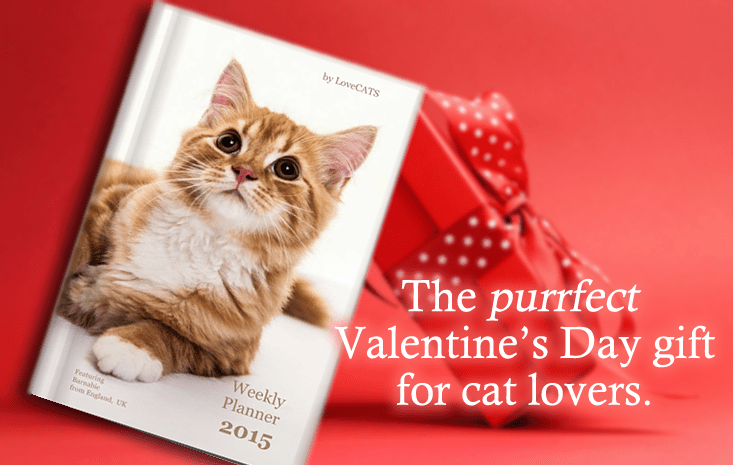 The purrfect Valentine's Day gift for cat lovers!