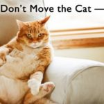 6 Signs Your Are Most Definitely Owned By Your Cat