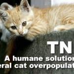 TNR : Keep feral cat overpopulation down