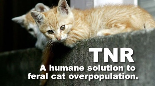 TNR : Keep feral cat overpopulation down