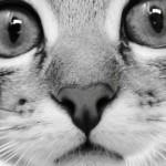 Responsible Pet Ownership Guide