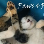 """""""Paws 4 Paws"""" First Edition"""