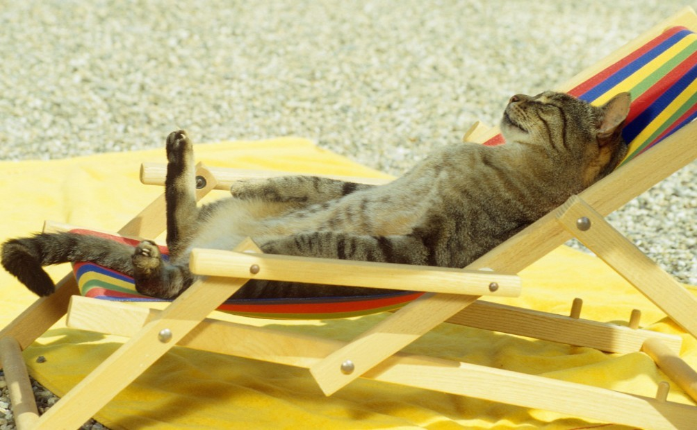 Cats during summer vacations