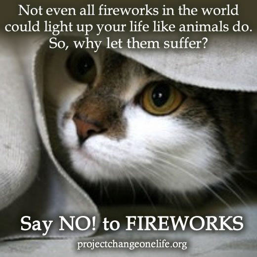 Keep your cats safe during fireworks