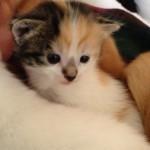 Tiny Millie