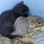 Mama cat and baby squirrel
