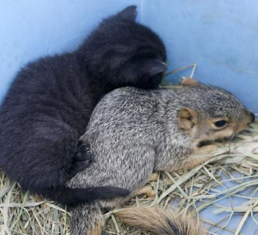 Cats and Squirrels