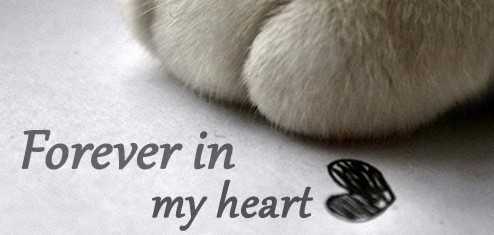 Pet Bereavement Support Groups Long Island