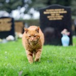 Barney, the cemetery cat
