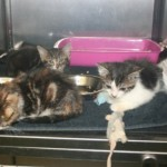 Tiny kittens saved after being dumped in rain