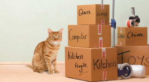 Moving with your cat
