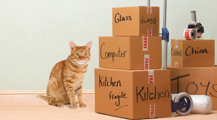Moving to a new home with your cat (or cats!)