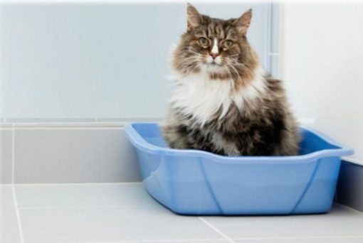 Is your cat missing the litter box?