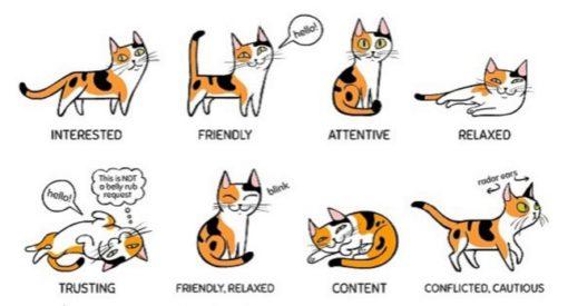 """Recognize common cat """"postures."""""""