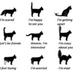 Cat Tail Language