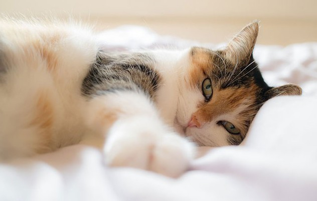 5 Ways Cats Can Cure Depression