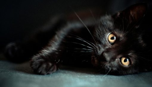 5 amazing facts about cats