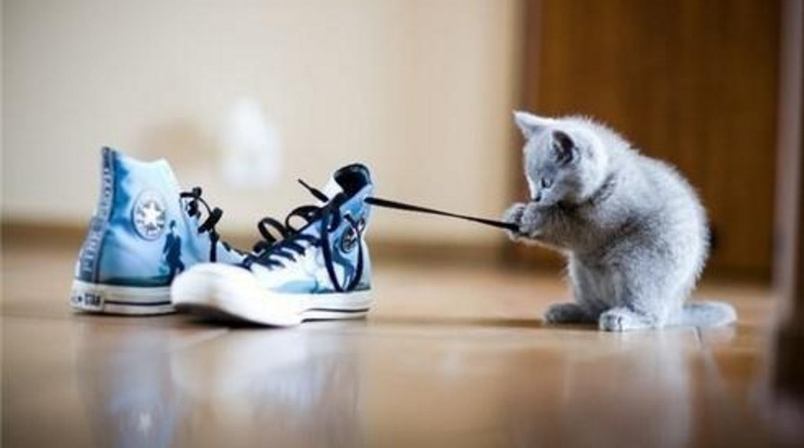 Why Does My Cat Love Shoes, Socks, or Bare Feet?