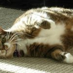3Happiness Secrets Only Cat Owners Know