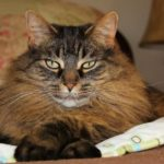 Is your cat aging well?