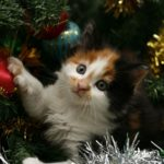 Keep cats safe at Christmas