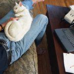 Cat lovers score higher on intelligence