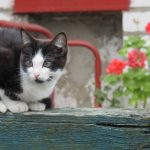Gardening tips for cat owners