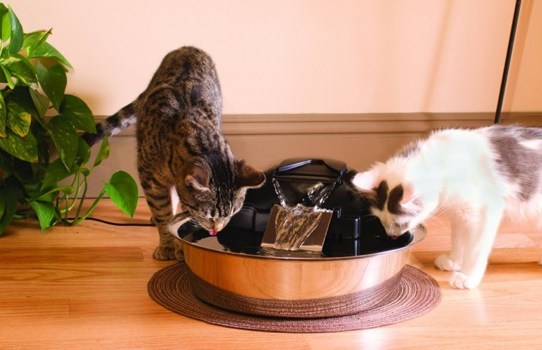 Tips to Increase Your Cat's Water Intake