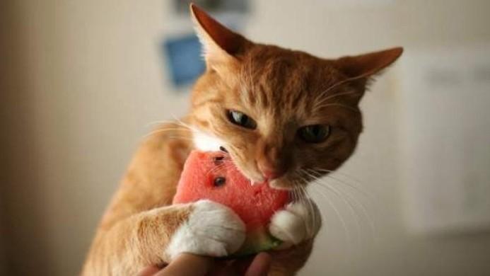 High Fiber Cat Food Additives For Diarrhea