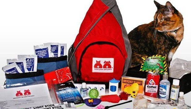 Do you have a first aid kit for your cat?
