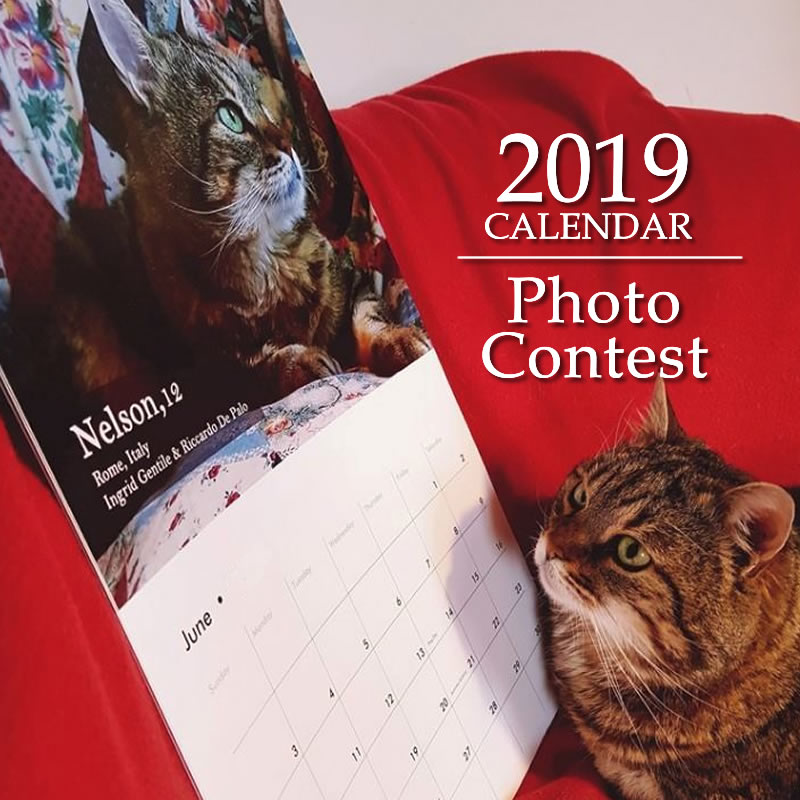 Have your cat featured in our 2019 Calendar!