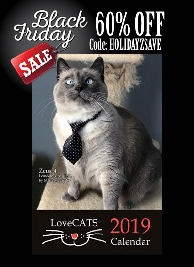 2019 Calendars 60% OFF with code HOLIDAYZSAVE