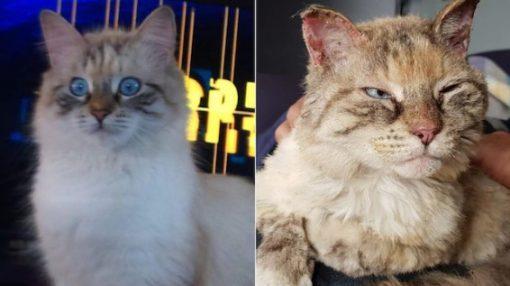 Cat survives Australian bushfires