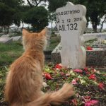 Broken-hearted cat mourns his late owner
