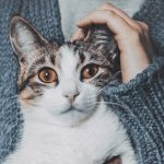 Do cats really bond to their humans?