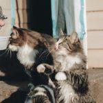 Coronavirus (COVID-19): How to stay healthy around pets
