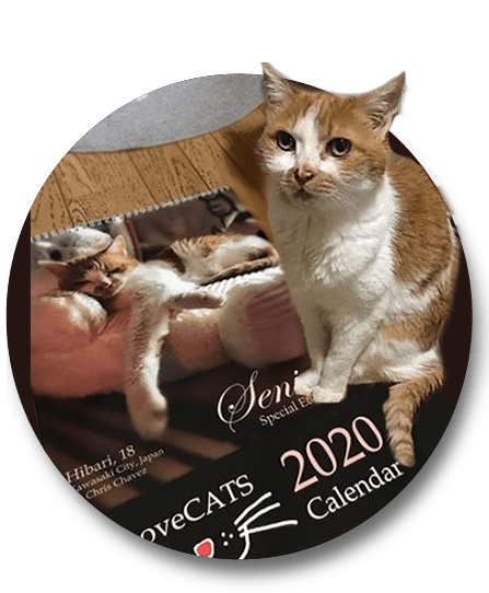 Hibari with LoveCATS 2020 Calendar