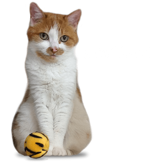 Join photo contest MEOW!