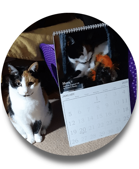 Hera with LoveCATS calendar 2020
