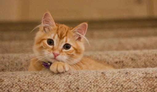 How long can a cat be safely left alone?